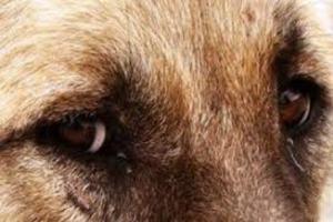 Σκότωσε αδέσποτο σκύλο με κυνηγητική καραμπίνα